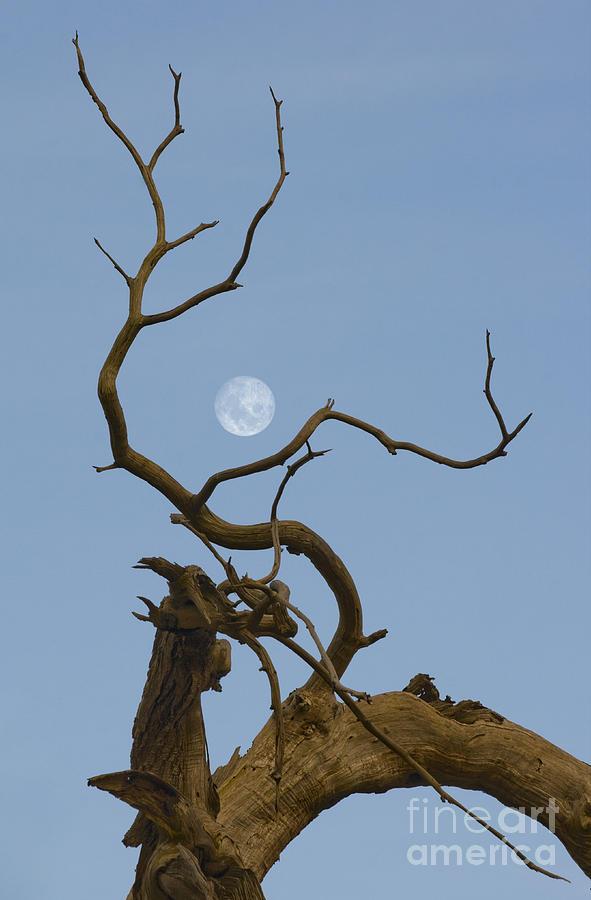 Moon Photograph - Cotton Moon by Sophie De Roumanie