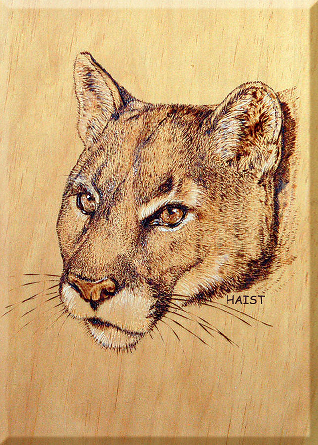 Cat Pyrography - Cougar by Ron Haist