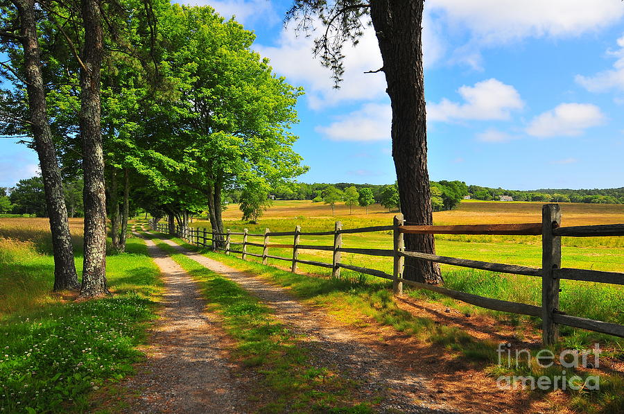 Country Road Photograph