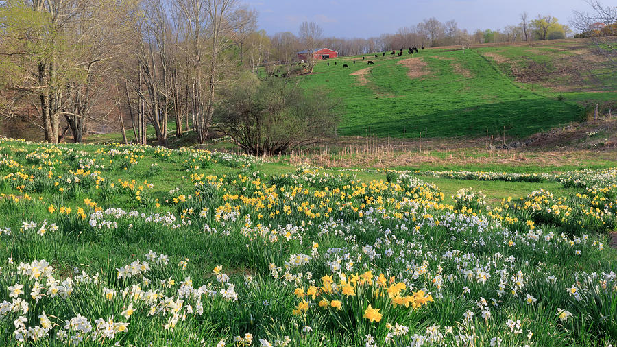 Country Spring Photograph