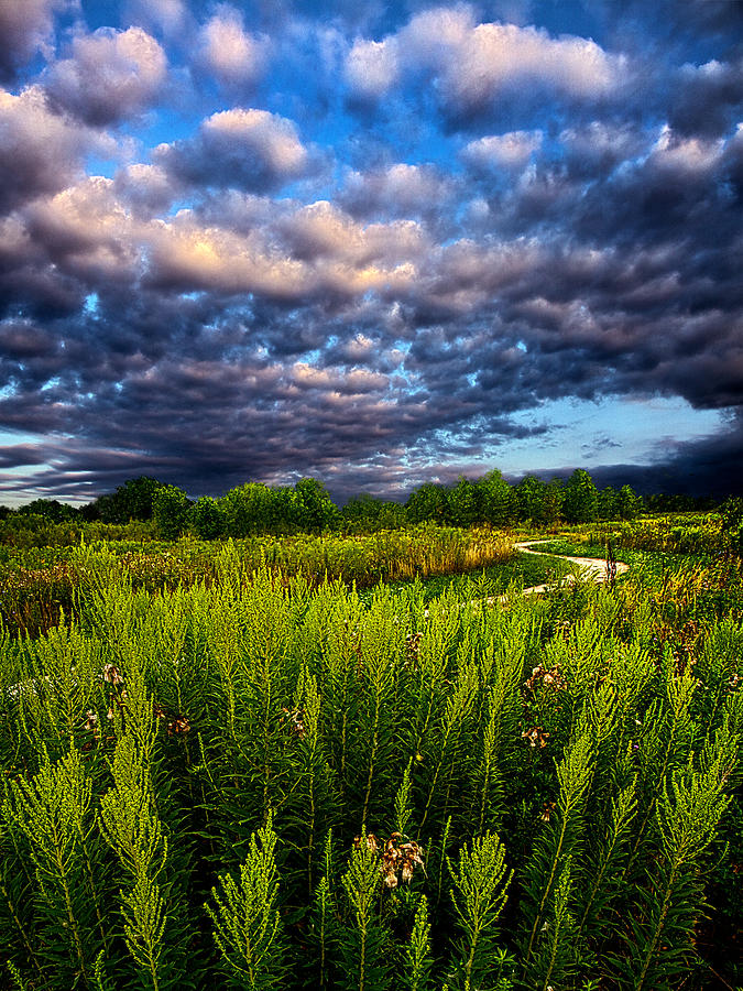 Horizons Photograph - Country Strolling by Phil Koch