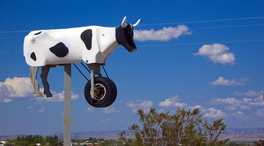Cow Photograph - Cow Power by Skip Hunt