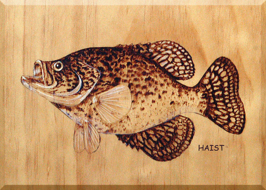 Fish Pyrography - Crappie by Ron Haist