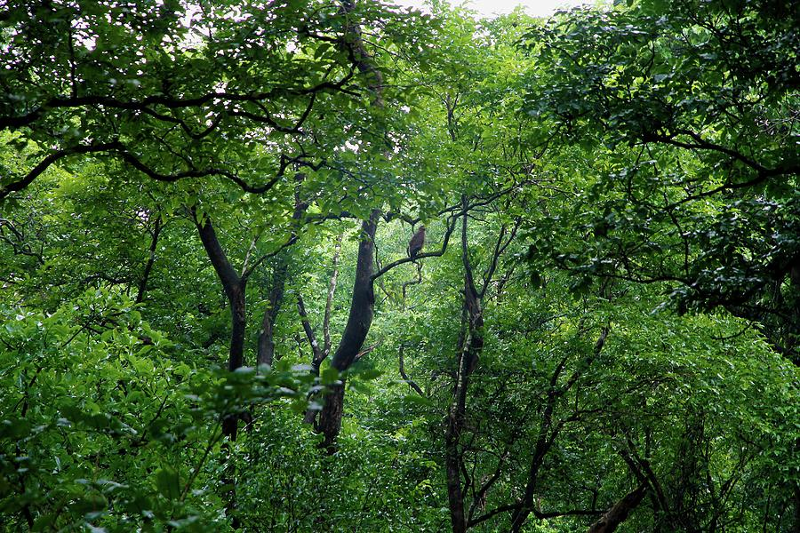 indian forest Indian forest, le parc de loisirs en vendée propose un véritable terrain de paintball ne cherchez plus, et venez vous jouez dans le parc accrobranche en vendée .