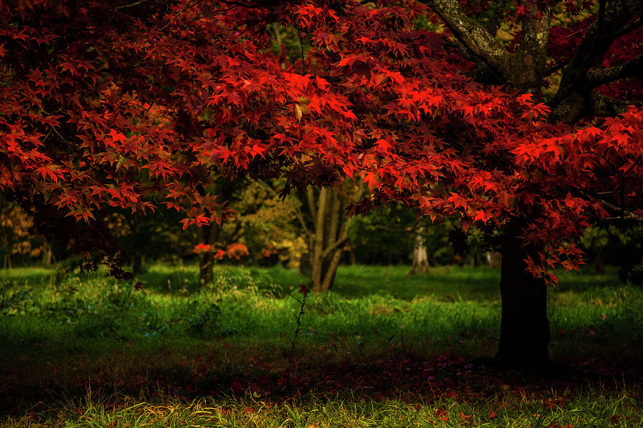 Crimson Fall Photograph
