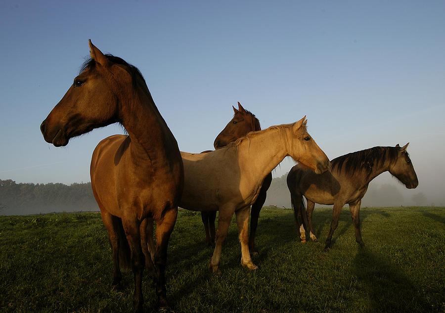 Animal Photograph - Criollo Mares Iv by Michael Mogensen