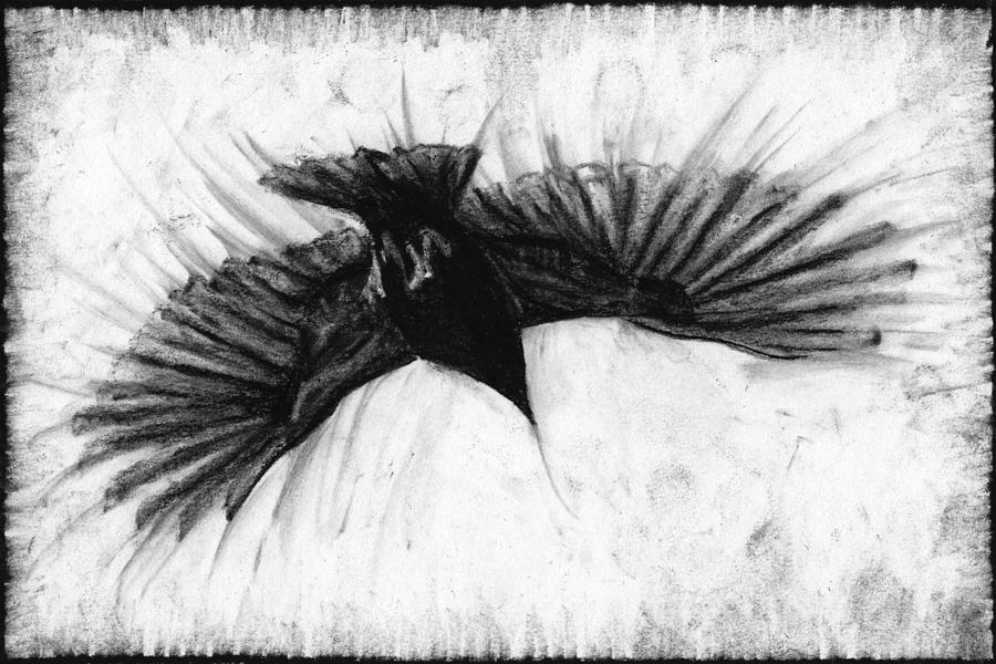 crow in flight drawing by john terwilliger