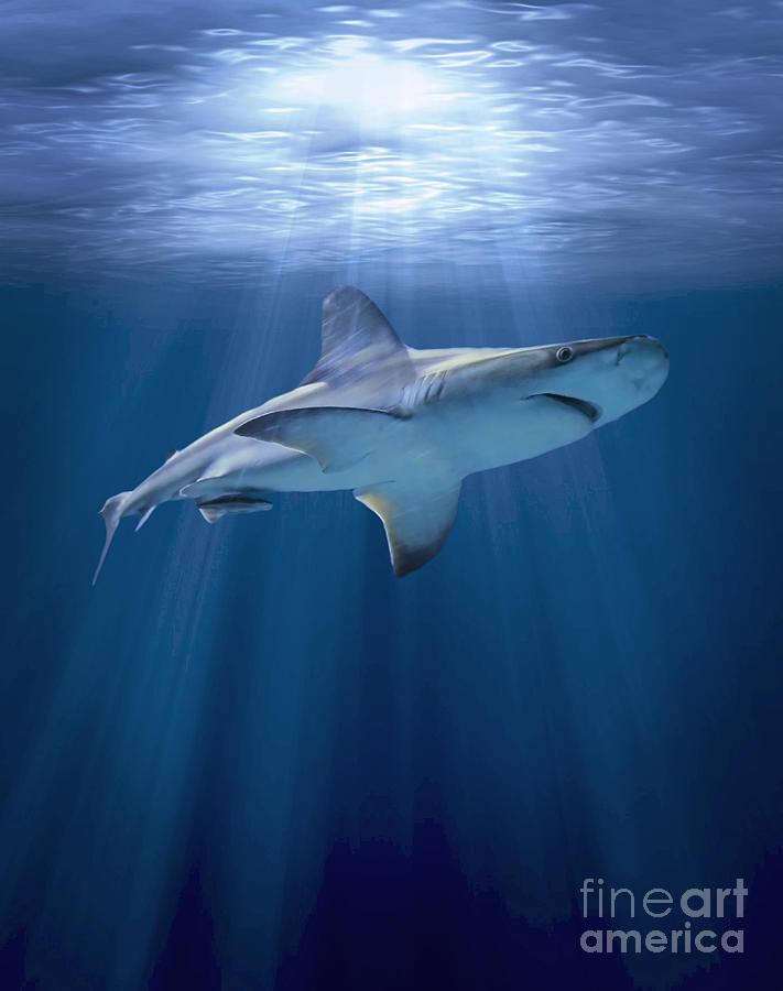 Shark Digital Art - Cruising Shark by Liz Molnar