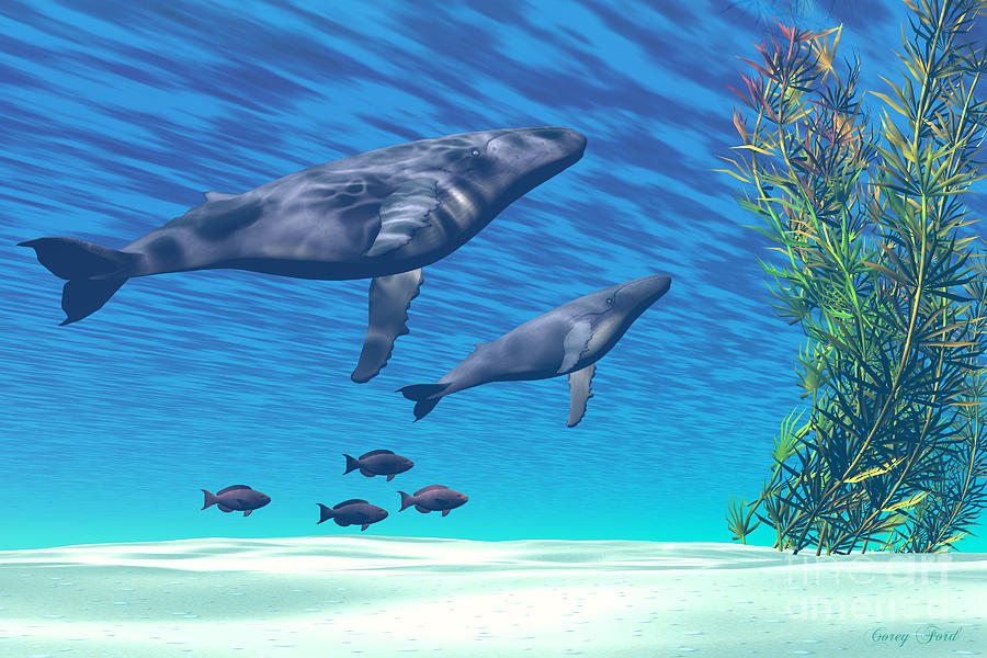 Humpback Whale Painting - Crystal Clear by Corey Ford