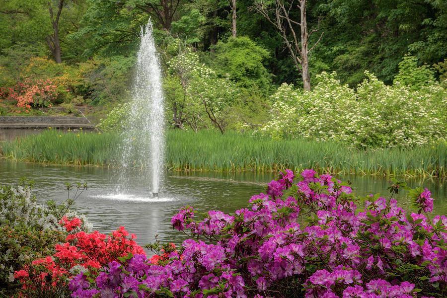 Crystal Springs Rhododendron Garden 0794 Photograph