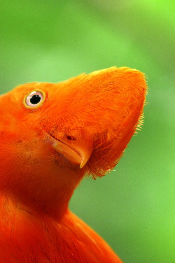Orange Bird  Photograph - Curious by Linda Russell