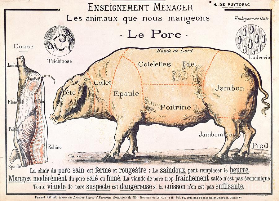 Eating;farm Animals; Cross Section; Loin; Rump; Flank; Butcher; Joint; Pig; Pigs; Shoulder; Ham; Belly; Shoulder; Diagram; Slaughter; Farming; Food Preparation; Domestic Science; Nutrition;teaching;education;home Economics; Farming; Breed;butchering Drawing - Cuts Of Pork by French School