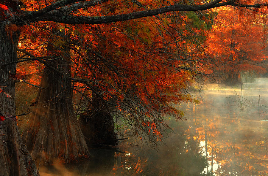 Misty Forest Photograph - Cypress Trees In Red by Iris Greenwell