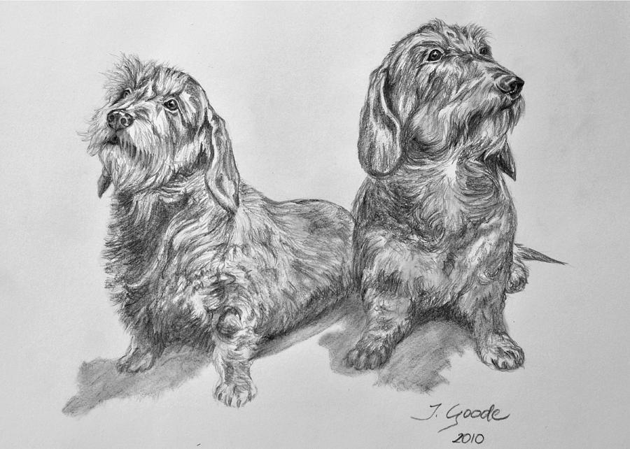 Dog Drawing - Dachshunds by Jana Goode