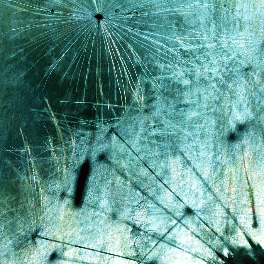 Dandelion Photograph - Dandelion Art 8 by Falko Follert