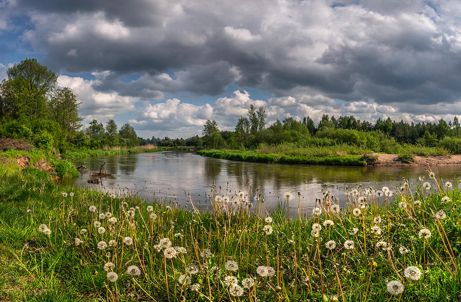 Liwiec Photograph - Dandelion Field On The River Bank by Dmytro Korol