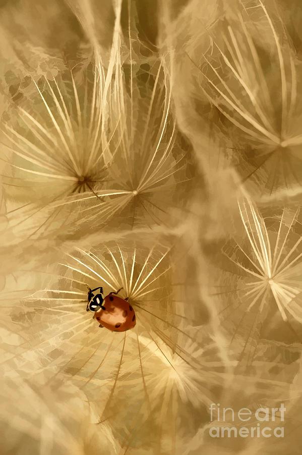 Dandelions Photograph - Dandelions Fairy Tales Iv by Iris Greenwell