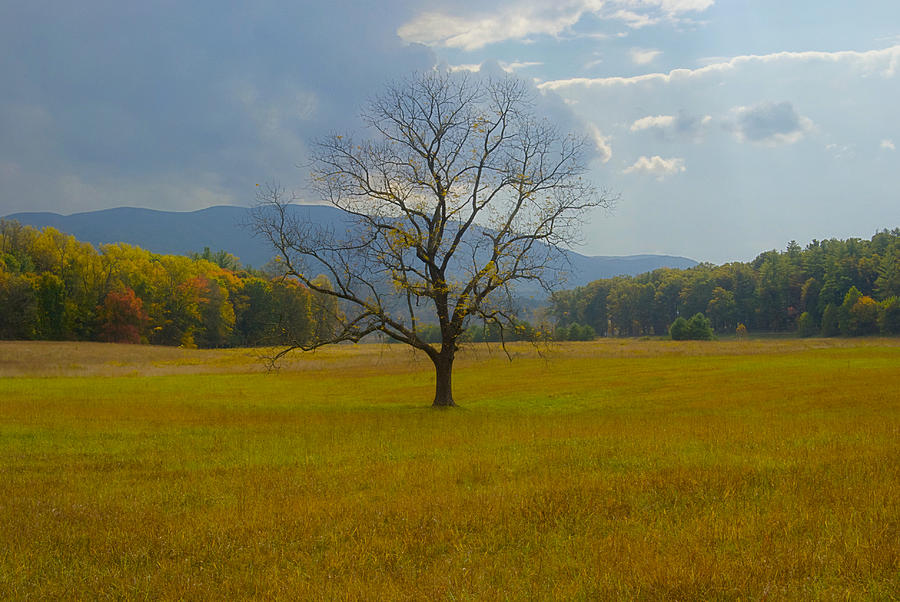 Landscape Photograph - Dare To Stand Alone by Michael Peychich