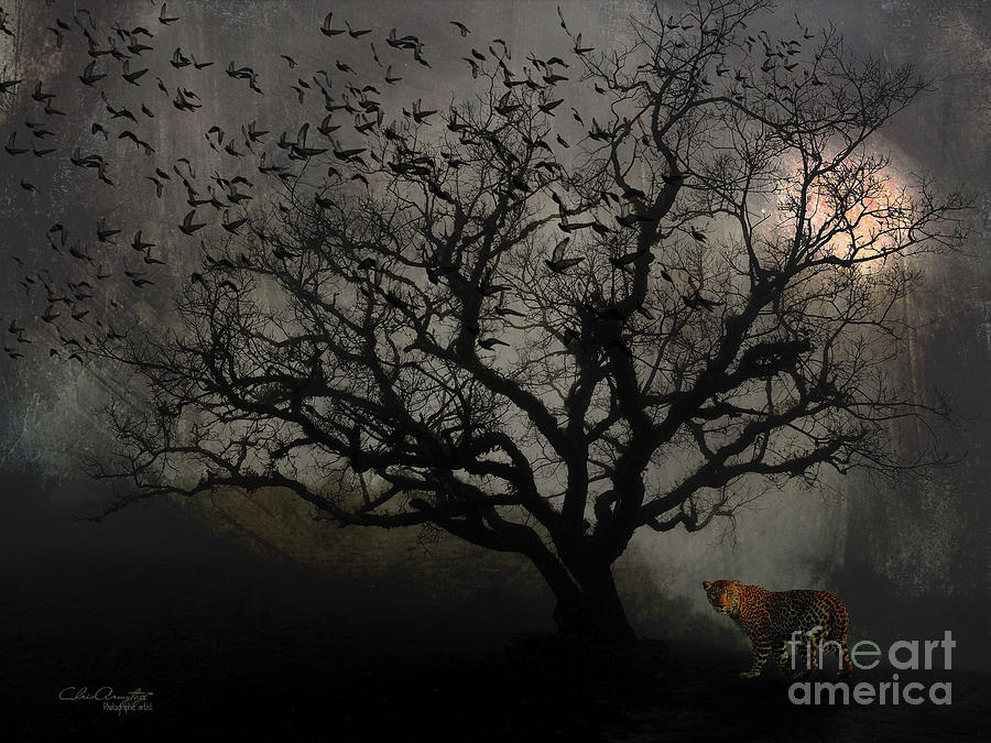 Dark Valley Photograph