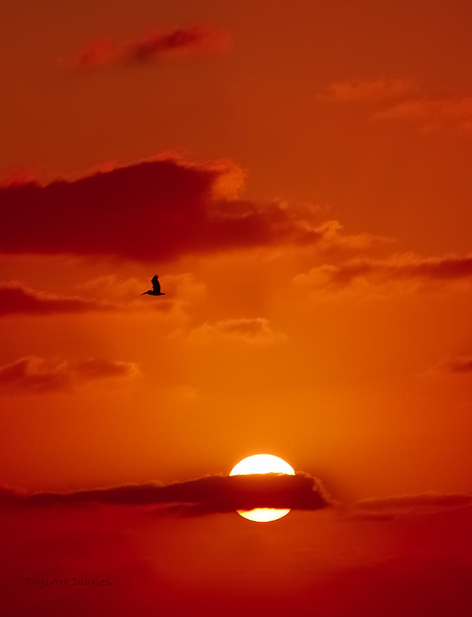 Dawn Flight Digital Art