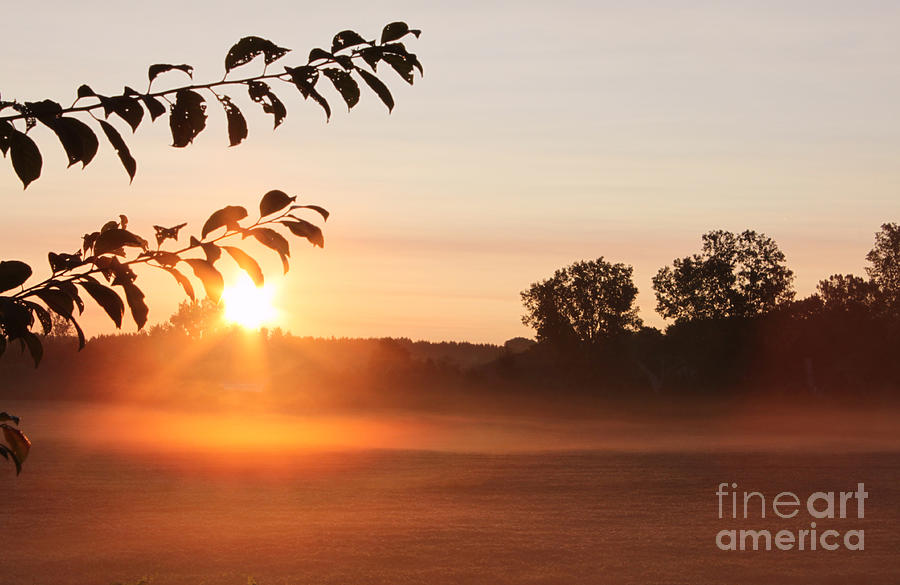 Morning Photograph - Dawn Of A Brand New Day  by Cathy  Beharriell