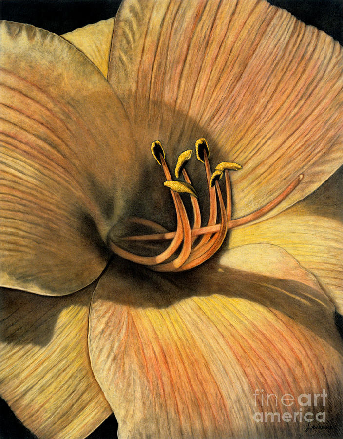 Lawrence Painting - Day Lily by Lawrence Supino