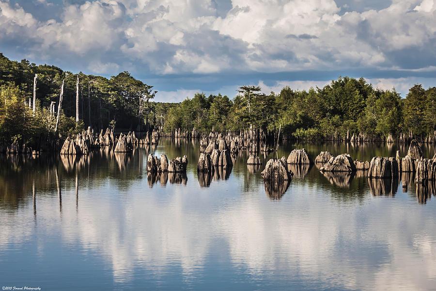 Dead Lakes Florida Photograph By Debra Forand