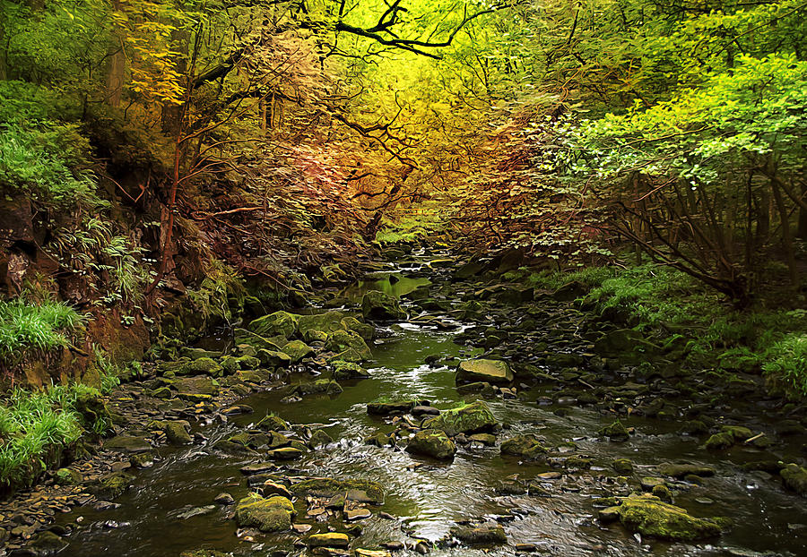 3d Photograph - Deep In The Woods by Svetlana Sewell