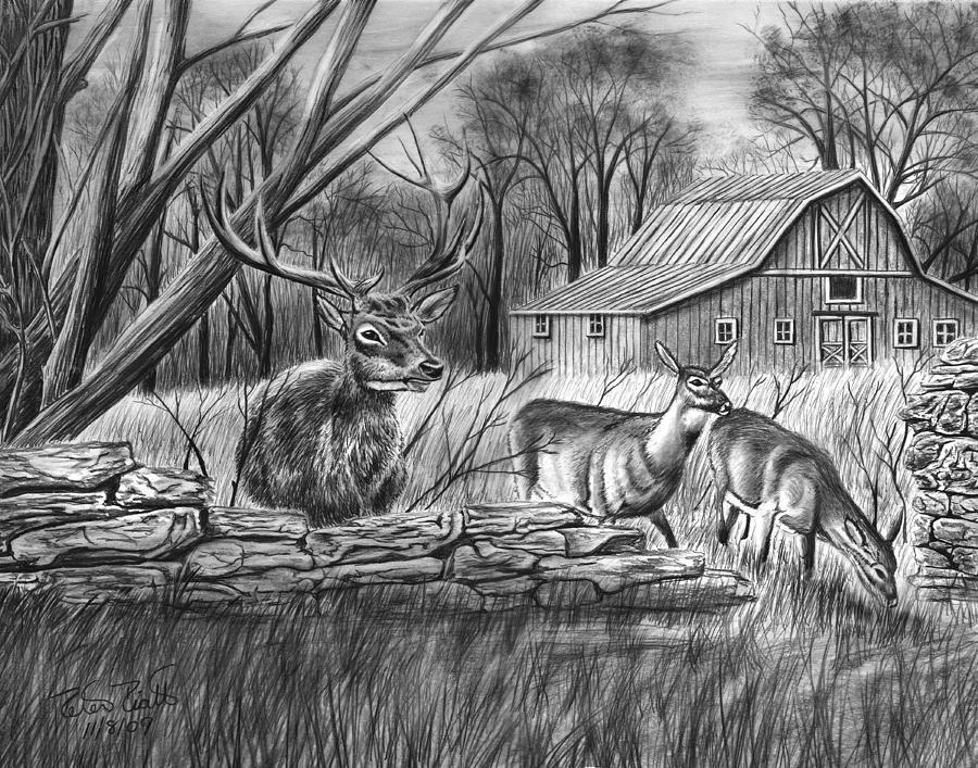 Deer Field Drawing By Peter Piatt
