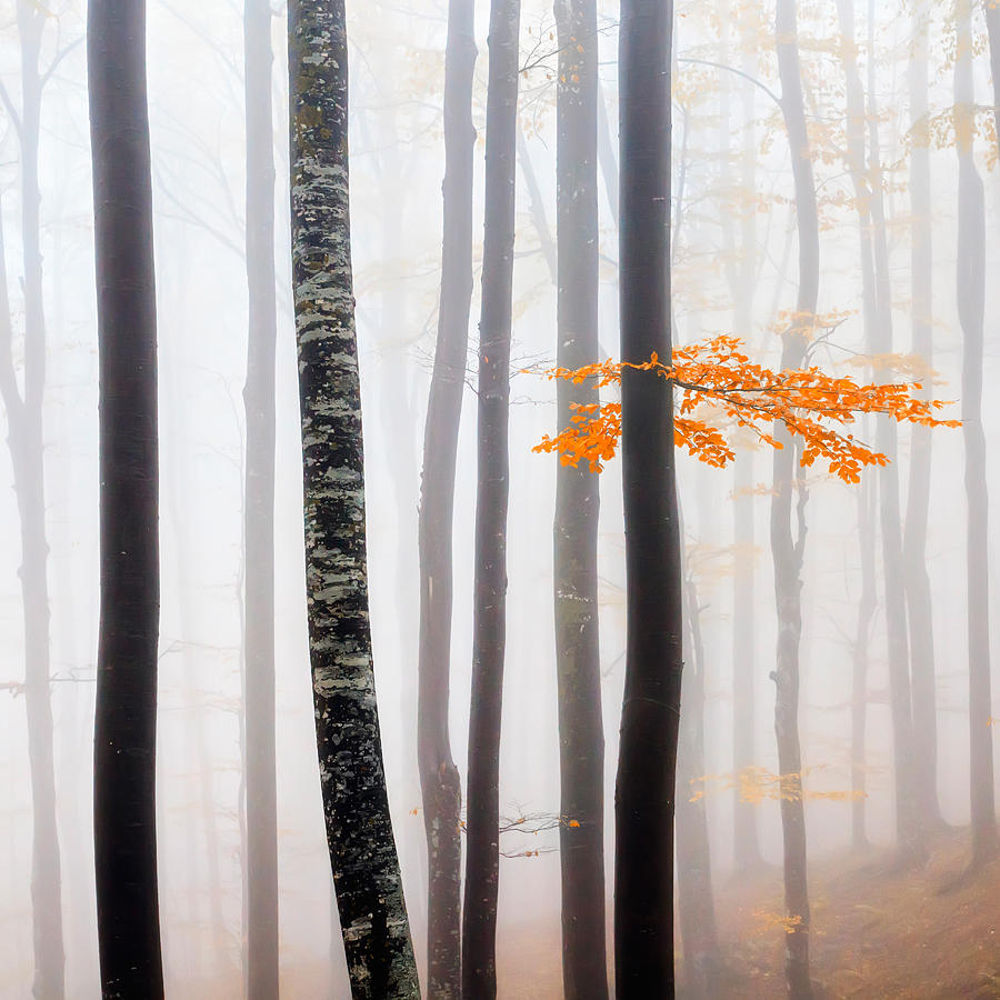 Balkan Mountains Photograph - Delicate Forest by Evgeni Dinev