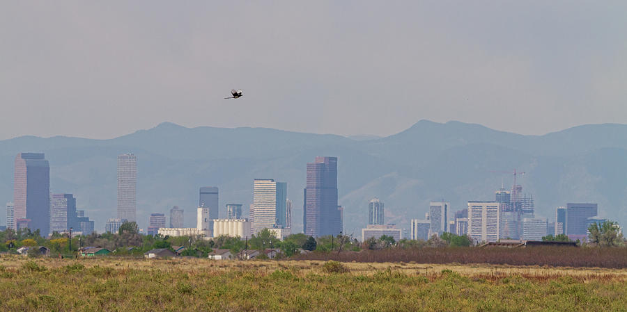 Denver Colorado Pretty Bird Fly By Photograph