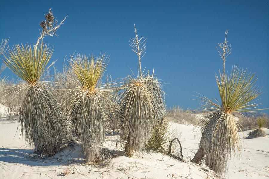 Desert Dwellers Photograph