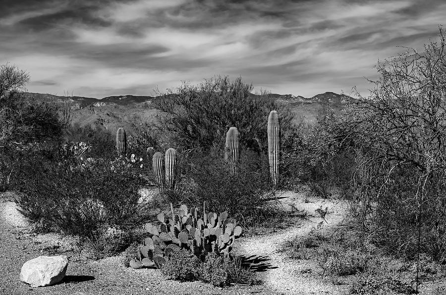Desert Passage Photograph