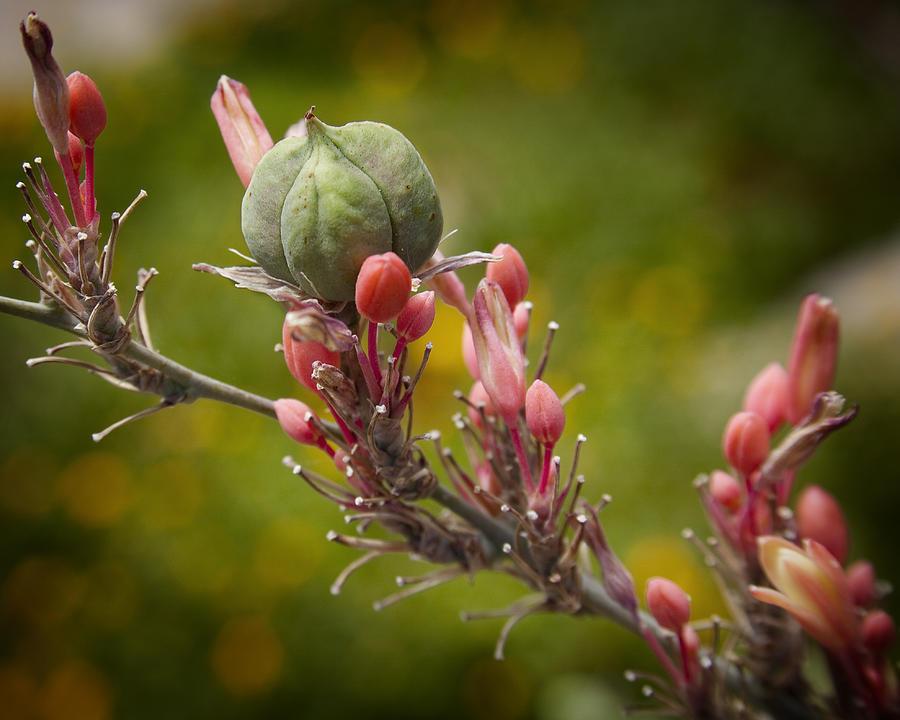 Desert Seed Pod 2 Photograph
