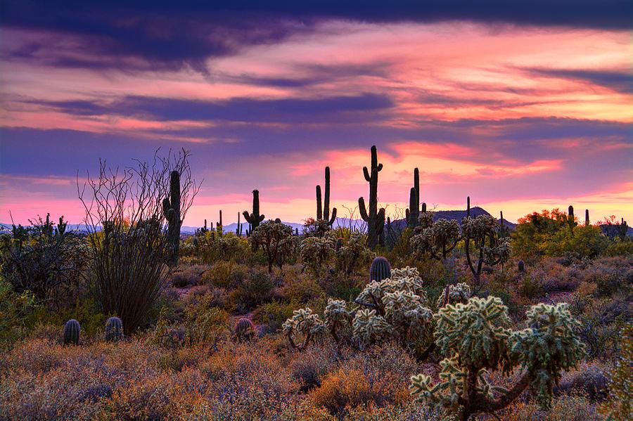 Desert Skies Pretty In Pink Photograph By Saija Lehtonen