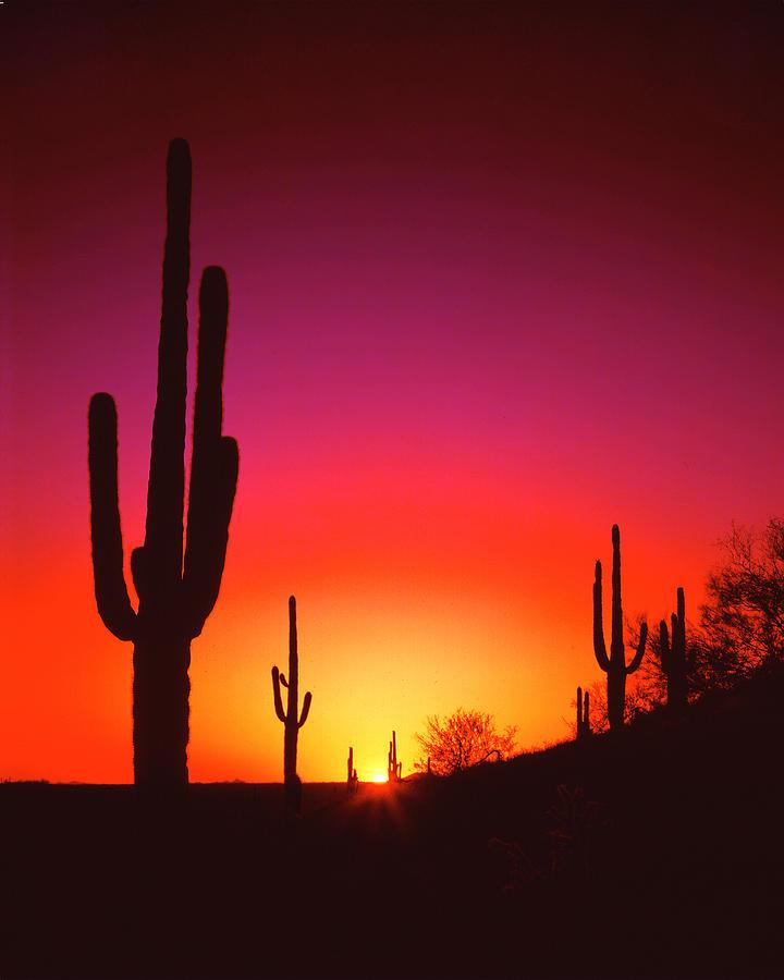 Desert Sunset Photograph by Frank Houck