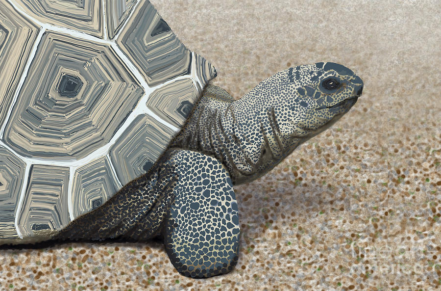 Image result for desert turtle painting