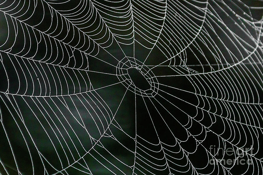 Dew Covered Spider Web Photograph