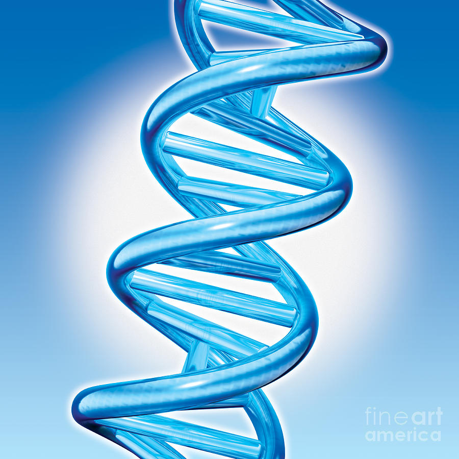 Dna Digital Art - Dna Double Helix by Marc Phares and Photo Researchers