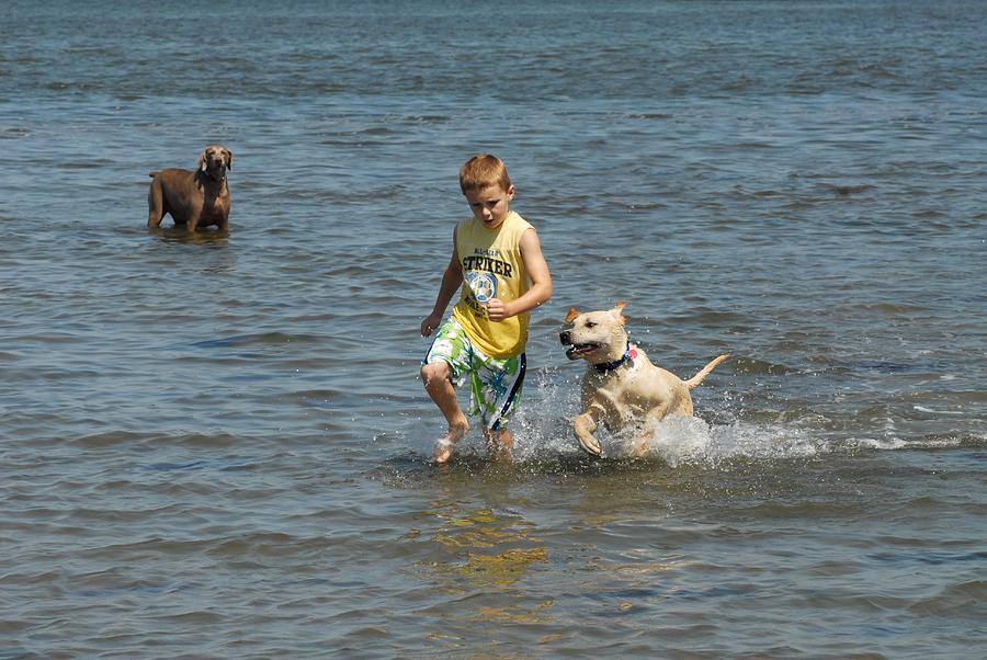 Dog 79 Photograph