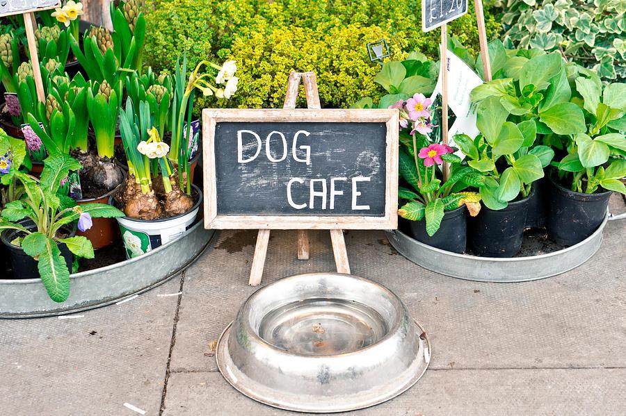Dog Cafe Photograph