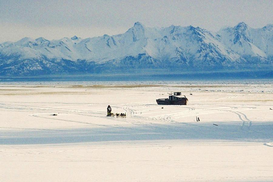 North Photograph - Dog Musher At Cook Inlet - Alaska by Juergen Weiss