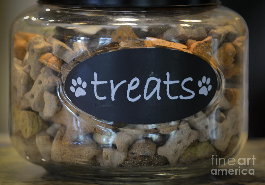 Dog Treats Photograph