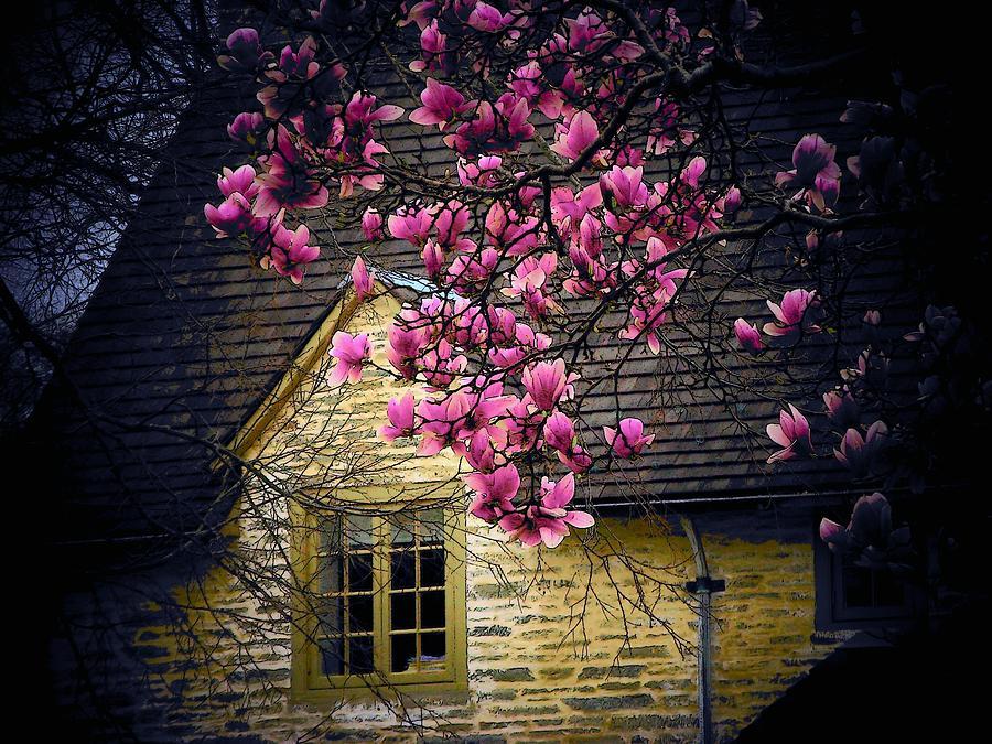 Flowers Photograph - Dogwood By The Window by Joyce Kimble Smith