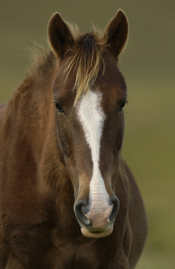 image gallery horse face front view
