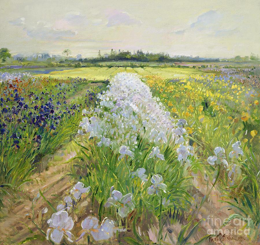 Iris; Field; Flower; Landscape; Irises; Flowers; Grass; Fields; Leaf; Leafs; Tree; Trees  Painting - Down The Line by Timothy Easton