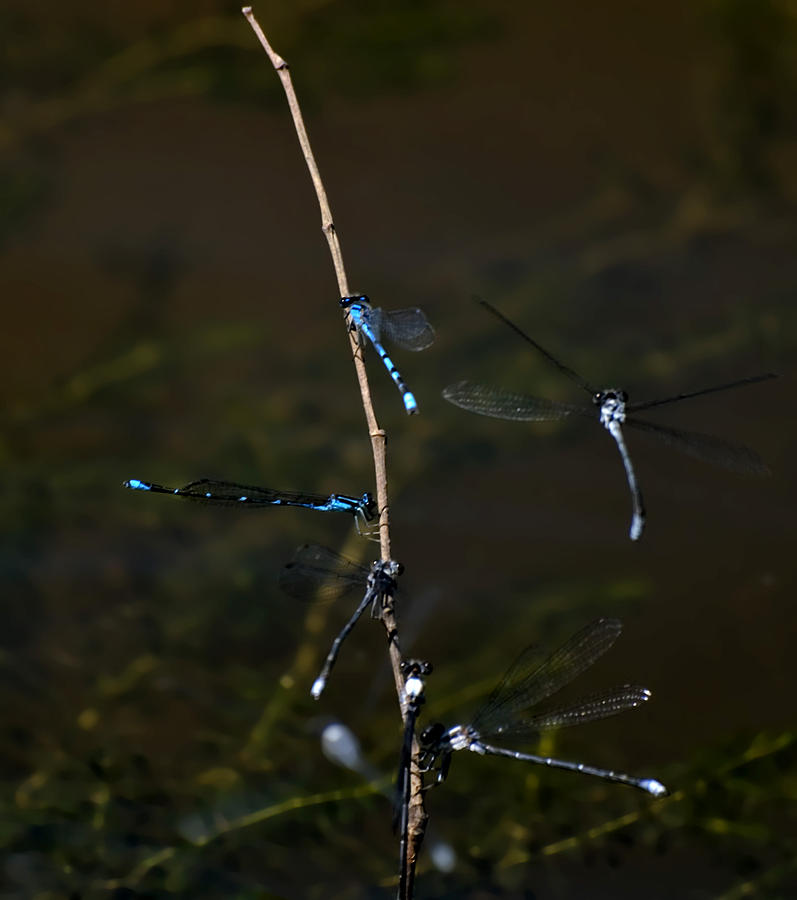 Dragonfly Hotel Photograph