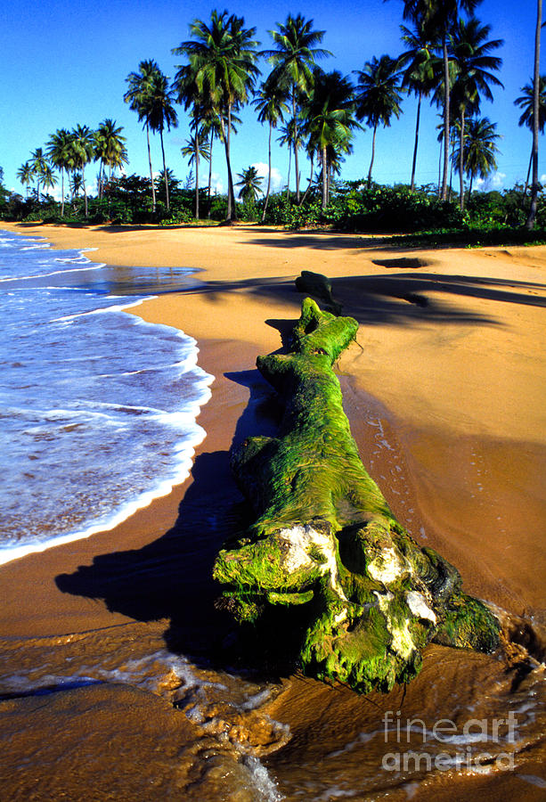 Puerto Rico Photograph - Driftwood And Palms by Thomas R Fletcher