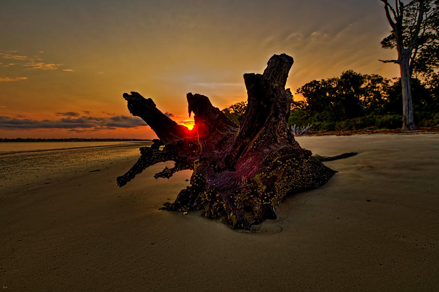 Driftwood Beach Hdr 2 Photograph