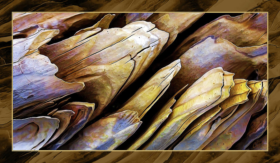 Driftwood Edges Photograph
